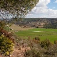 Caltagirone Wald von Santo Pietro