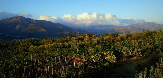 wine tour of Sicily: Treno dei vini Etna 2016