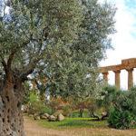 ponte 2 giugno 2017 Sicilia