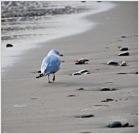 spiaggia Capo Alì